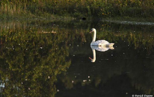 Balade et quelques observations au parc du Marquenterre