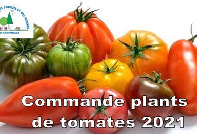 Plants de tomates à vendre au Jardin de l'Ermite