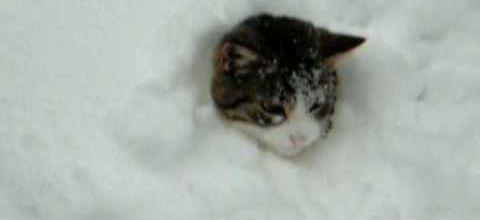 La chat dans la neige