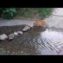 Chachou au ruisseau