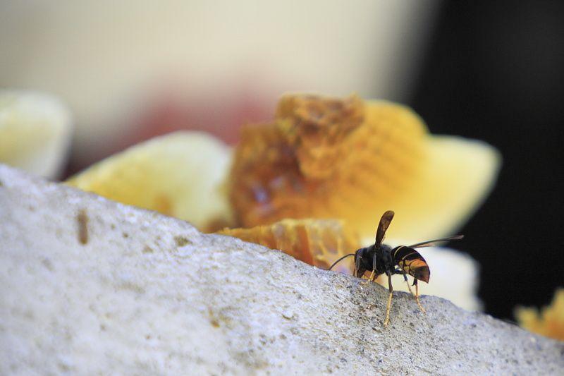 Suite des albums sur la ruche improvisée..