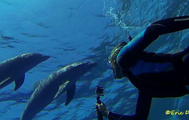 Nouvelles Auto-identifications des dauphins