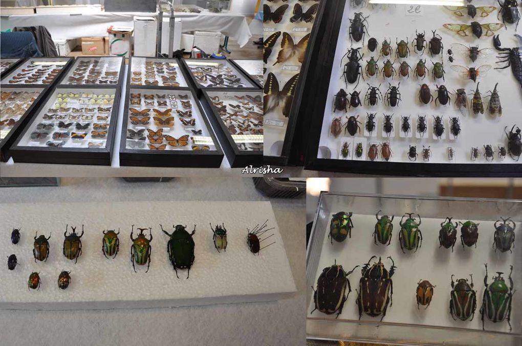 """Les 13 et 14 juin 2009 à Villers-Cotterêts (02), organisé par l'Association photographique """"GRAND ANGLE"""". Reptiles, serpents, lézards, insectes, araignées, papillons et petits rongeurs, .... Exposition, ventes à des particuliers. Pour certai"""