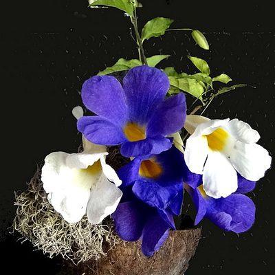Une composition florale simple