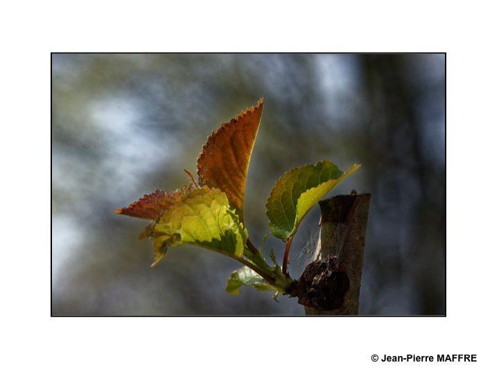 Après les couleurs de l'automne et de l'hiver, les verts mordorés illuminent le printemps.