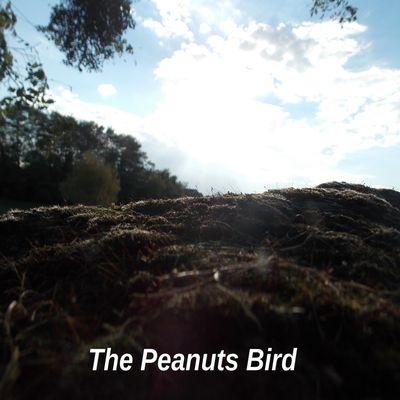 The Peanuts Bird's Dream