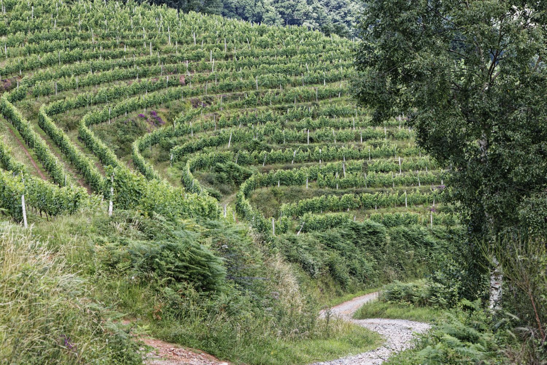 L'Arradoy et le vignoble d'Irouléguy