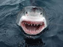 Les Dents de la mer.