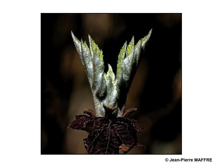 Le printemps fait éclore toute une profusion de bourgeons et de feuilles dans un soleil qui joue avec les ombres et les lumières.