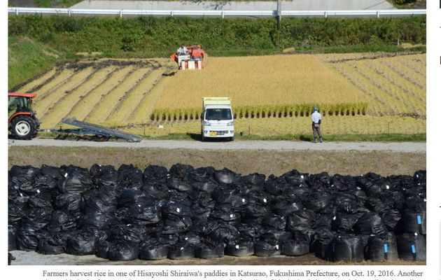 Is temporary storage the worst problem for Fukushima farmers?