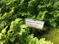 Pteris agyreae, Selaginella martensii, Asplenium nidus