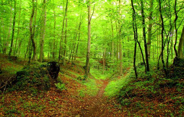 les Monts dans la forêt de Compiègne