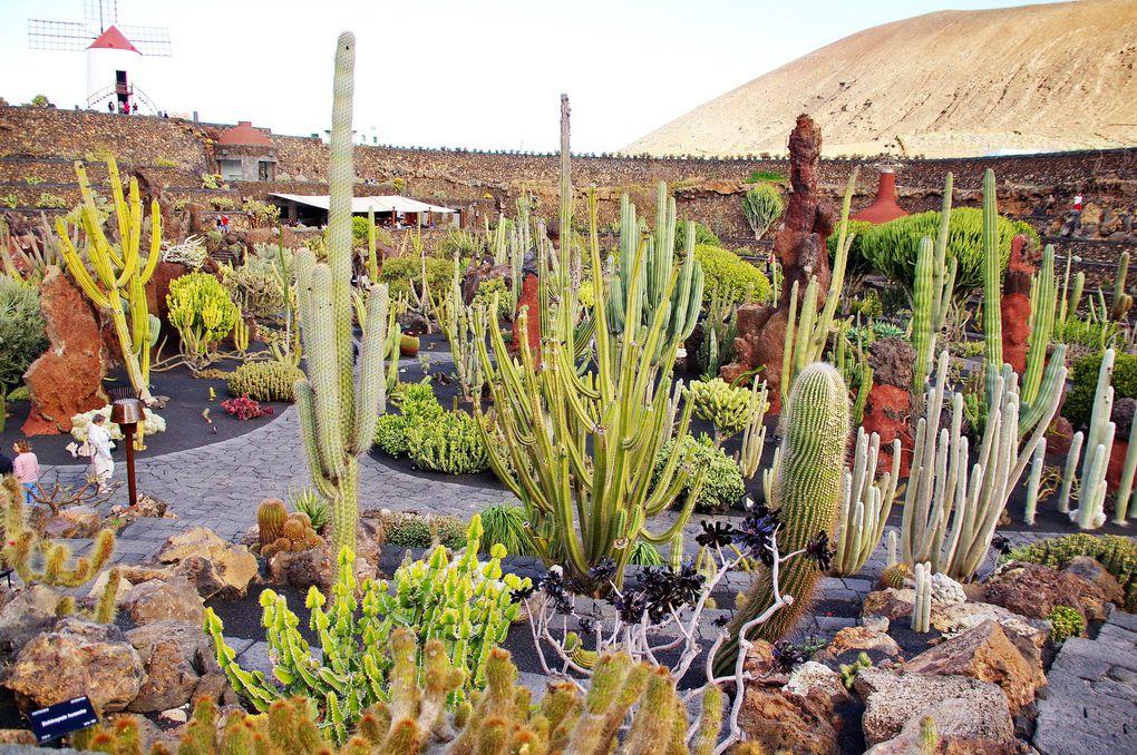 Jardins des Cactus