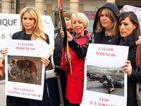 manifestation animale pour la défense des lévriers au Palais Royale à Paris