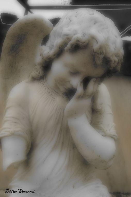 Album - PLATEAU-BRIARD