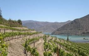 Region of Coquimbo and vines