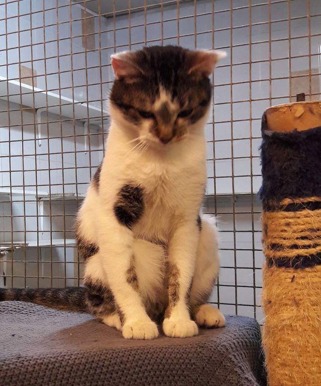Il est adopté !!! : ARMAND, magnifique mâle castré de 3 ans