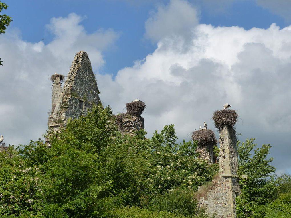 Sortie Marais du Cotentin