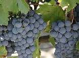 #Red Cahors Producers South-Ouest France