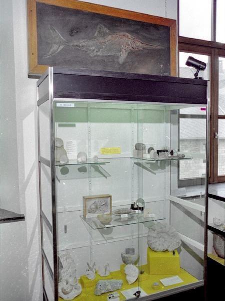 <p> Quelques photographies de l'expo réalisée au Centre d'Exposition de Wéris en 1996. </p> <p> Pièces appartenant à ma collection bien sûr mais également à celles de Roland Deconinck, André Baijot, pièces et moulages prêtés par l'Université de Liège, le Centre Grégoire Fournier, le Muséum d'Histoire Naturelle de Bruxelles… </p> <p> Photographies réalisées par Roland Deconinck. </p> <p> Bonne visite ! </p> <p> Phil « Fossil » </p>