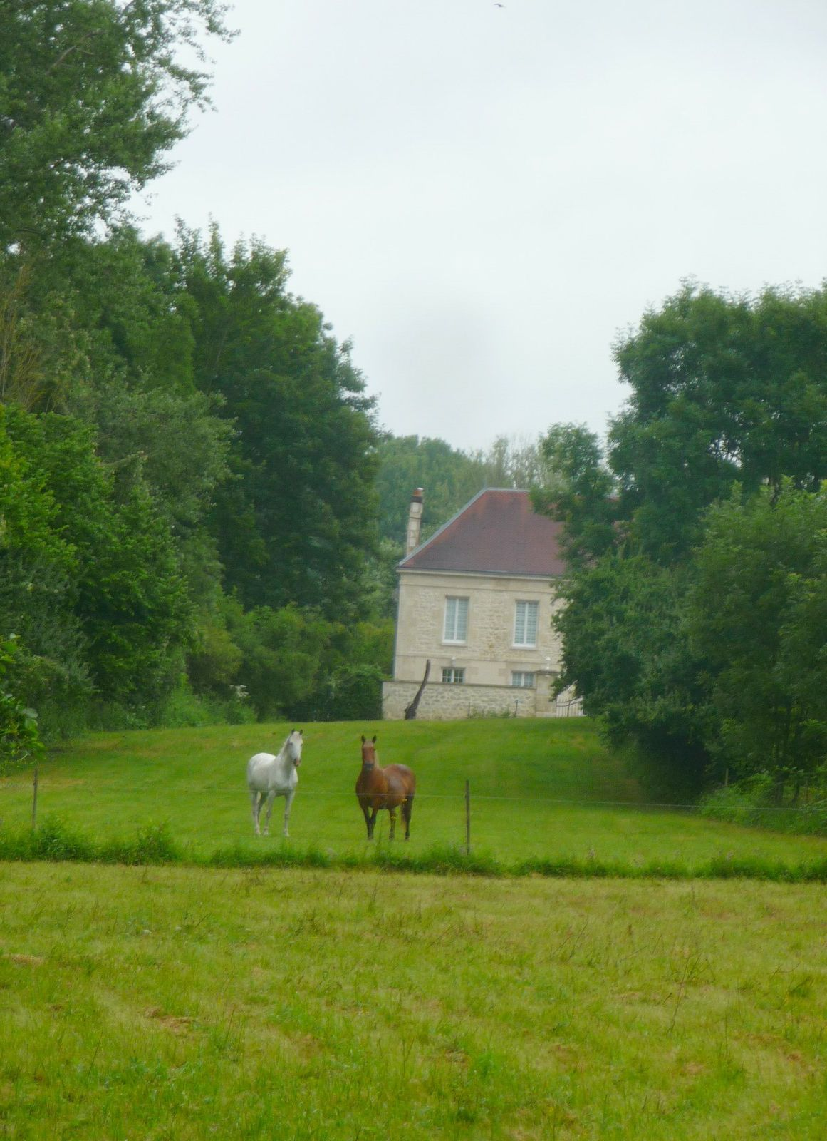 Randonnée du 25 juillet à Mareuil-en-Dôle avec Françoise