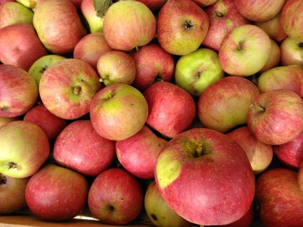 """Gelée de pommes """"bio"""" de la ferme de Villars"""
