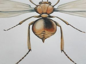 ILLUSTRATION botanique & entomologie