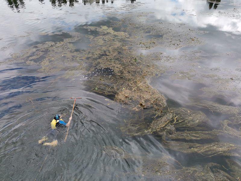 Journée arrachage des algues