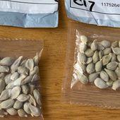 Envois non sollicités de semences en provenance de Chine à des particuliers français