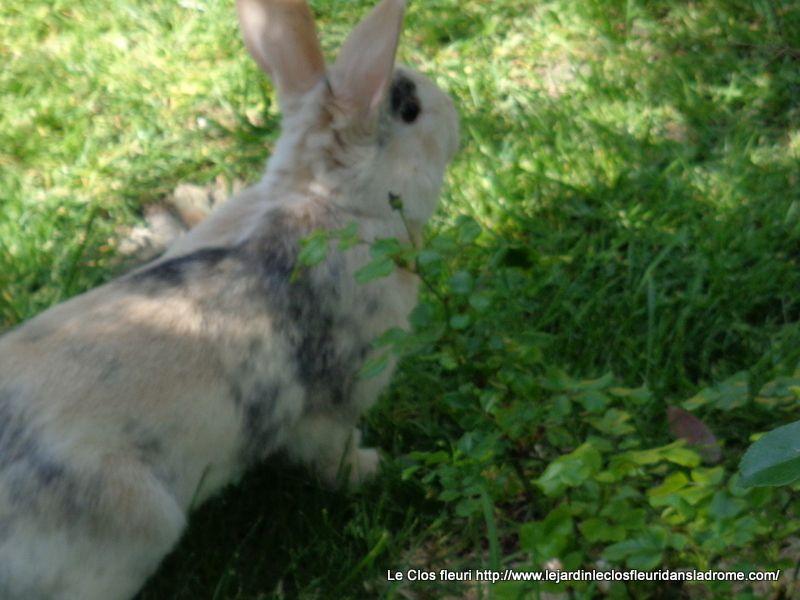 """Mon petit lapin """"Ourssinet """" au jardin ....."""