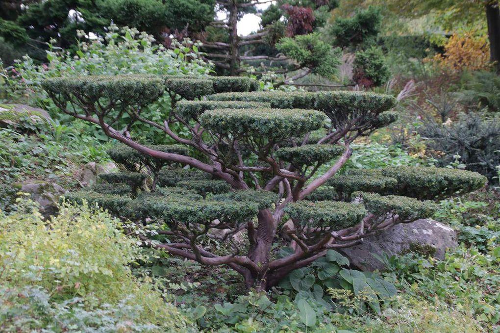 L'arboretum de Paris