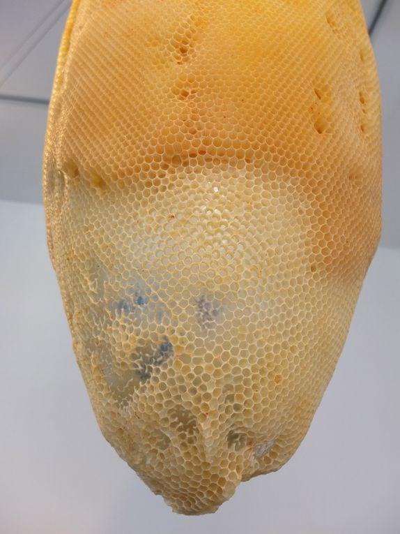 """Tomas Libertiny, """" The seeds of Narcissus """", 2011, cristal, argent et cire d'abeilles, Collection du mudac. Contrastes de couleurs et de matières."""