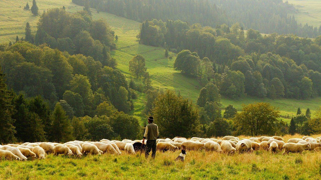 20. moutons, le retour ?
