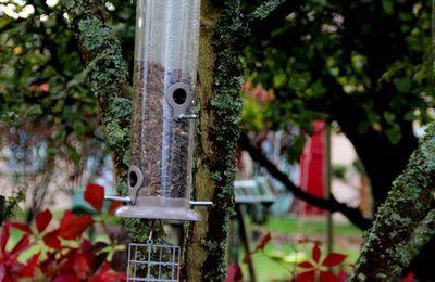 Les oiseaux et le nourrissage, petites reflexions perso. 2