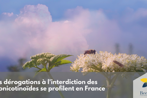 Mobilisons nous : un article interessant de l'association BEE LIFE pollinisateurs et  agriculture