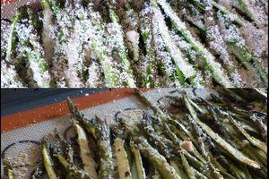 Asperges vertes rôties au parmesan