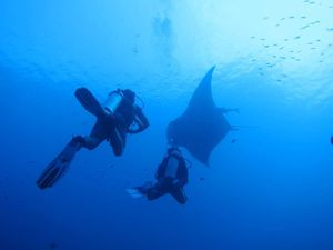 Who wants to be a Divemaster?