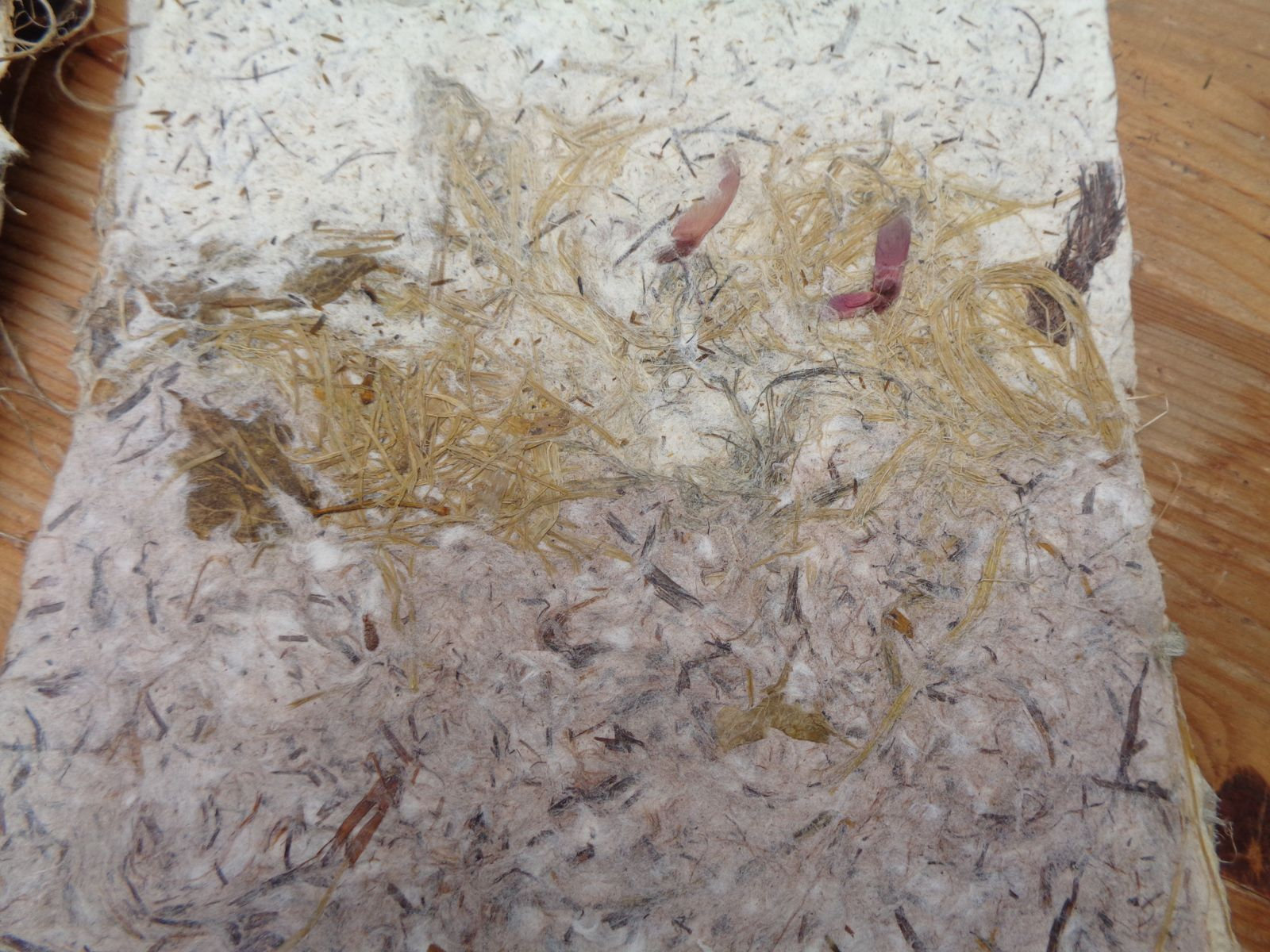 4 Livres carré petit format , feuilles de chataignier , feuilles et écorces, papier de carex, papier de mimosa et delphinium . Le grand livre carré: jonc, carex, asperge, feuilles de châtaignier, plumet de la pampa, feuilles d'ortie, armoise ,papyrus ...................