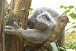 lire avec les animots rigolos (le koala 1)
