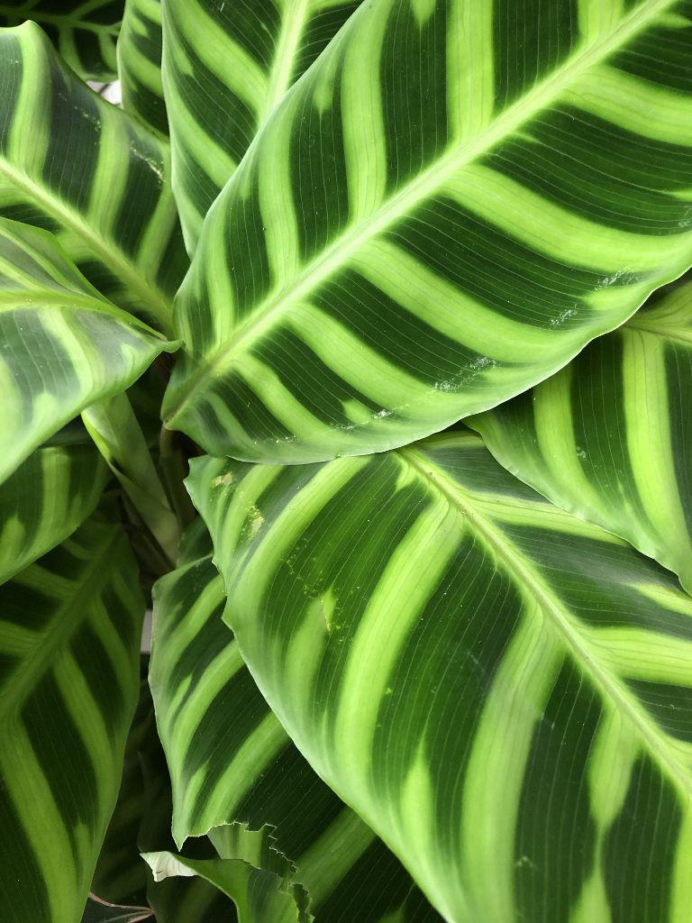 Feuilles des plantes