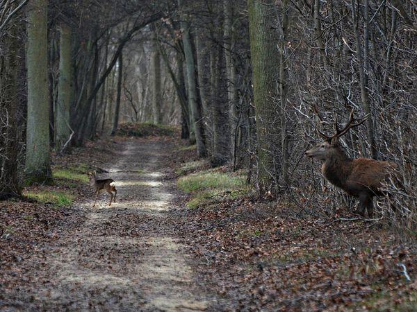 Photographies réalisées par Jean-Philippe (http://jp-nature.skyrock.com/ )