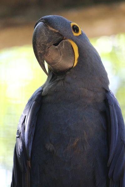 La park des Aves - Parc des oiseaux au Brésil