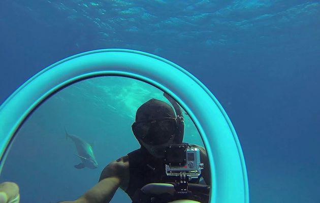 Les stagiaires en action avec les dauphins