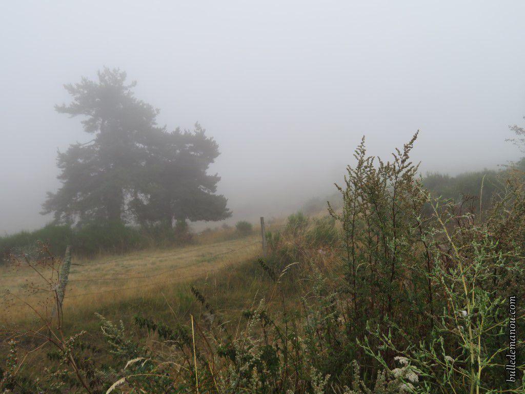 Un brouillard épais et rare en été.