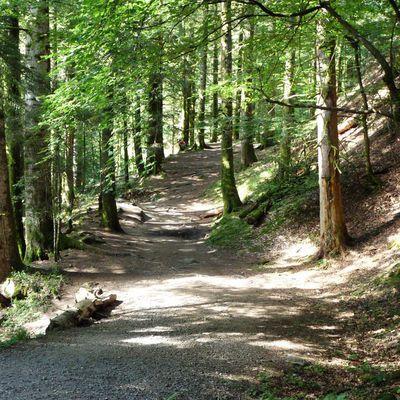 Auvergne : la ronde des cascades