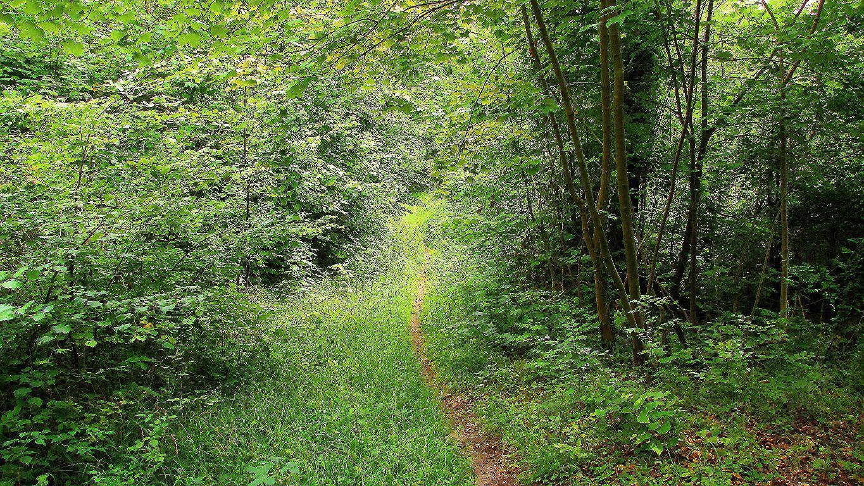 carrefour_Route Forestière des Beaux Monts_Route des Prés du Liban (1)