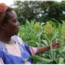 L'agriculture de conservation est-elle une solution «intelligente» pour les agriculteurs africains?