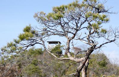 Takarazuka: Le parc forestier de Nishitani 兵庫県宝塚西谷の森公