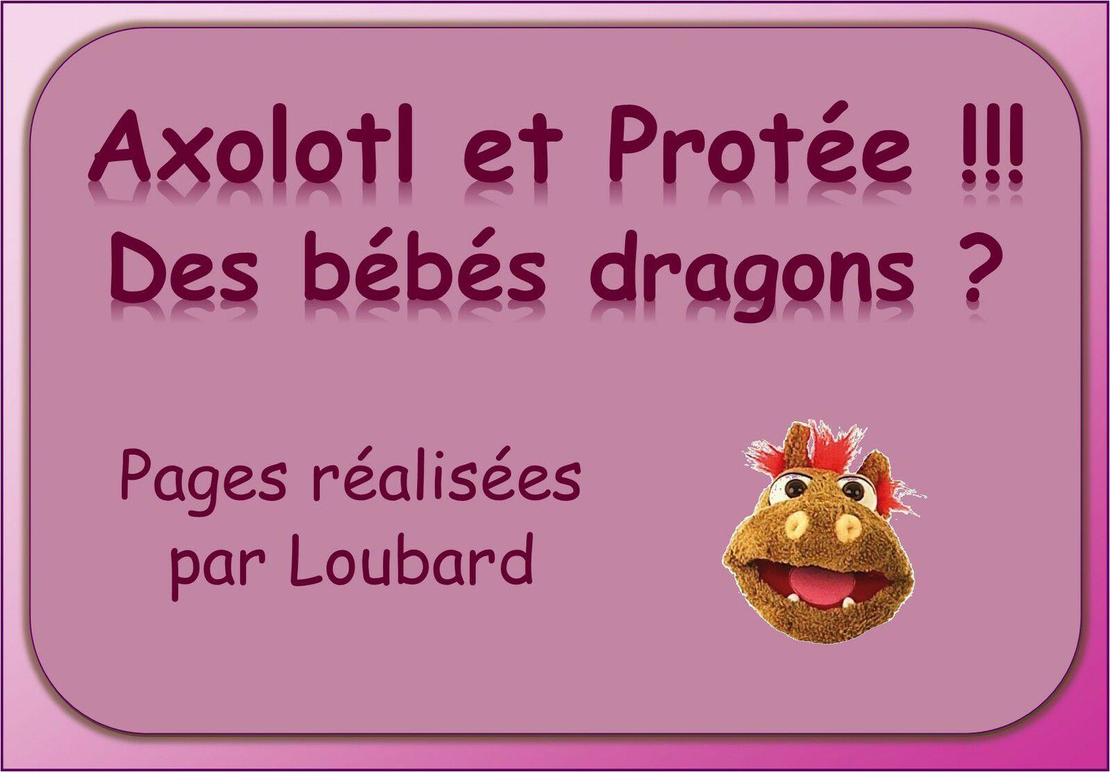 AXOLTL ET PROTEE !! DES BEBES DRAGONS ?