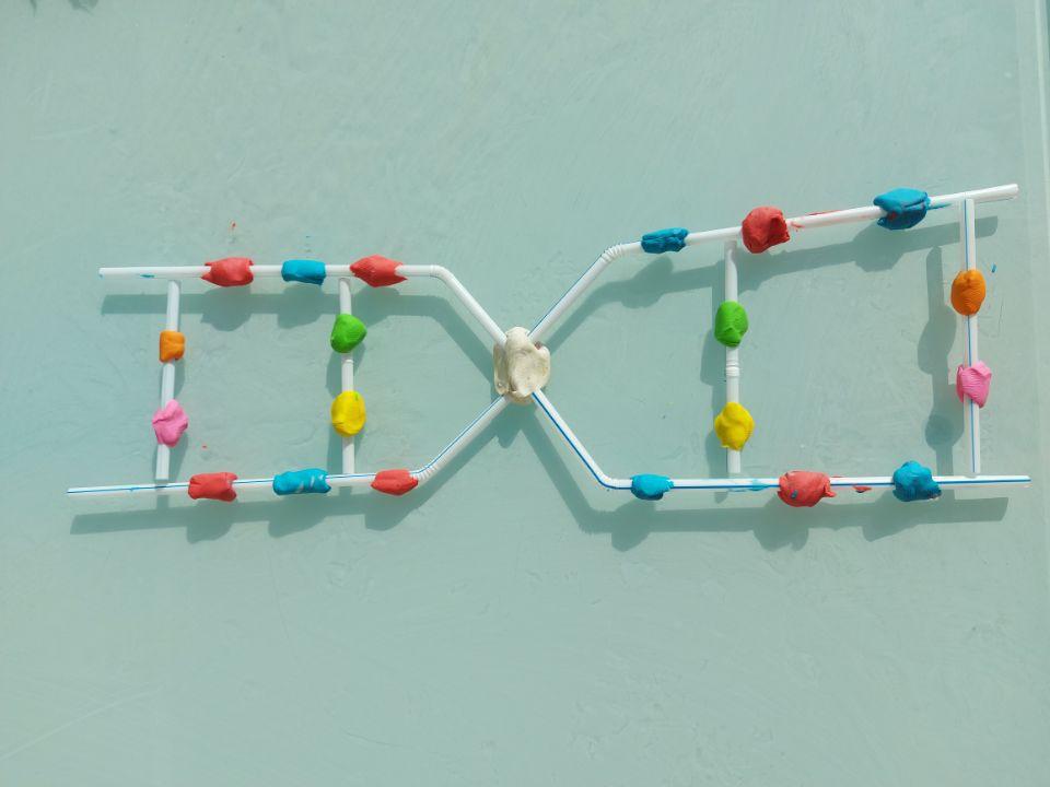 MODELOS DE ADN EN CONFINAMIENTO